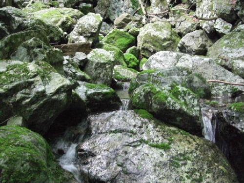 岩だらけ.jpg