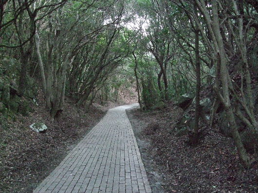 木のトンネル.jpg
